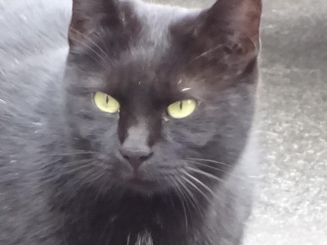 黒猫の目が光る 【今日の一枚】