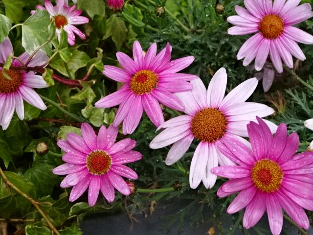 雨に濡れる花【今日の一枚】