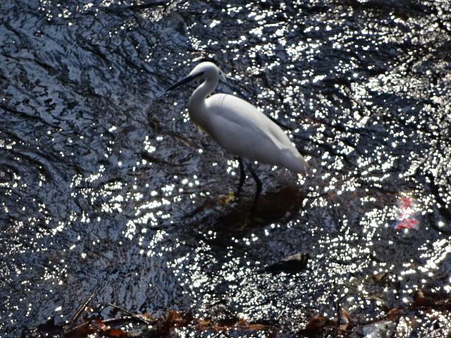 流れる水に白い鳥【今日の1枚】