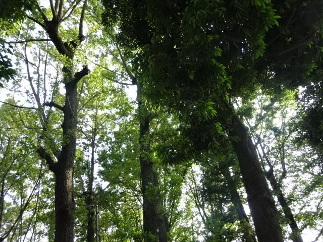 緑色が複雑に散りばめられた、風景。【今日の一枚】