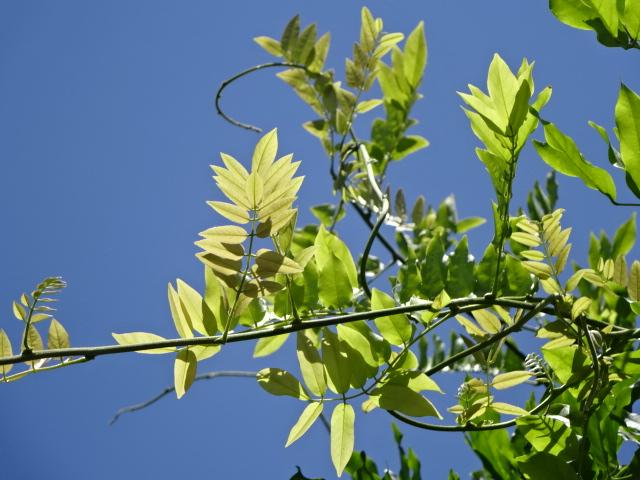 青空に萌える緑