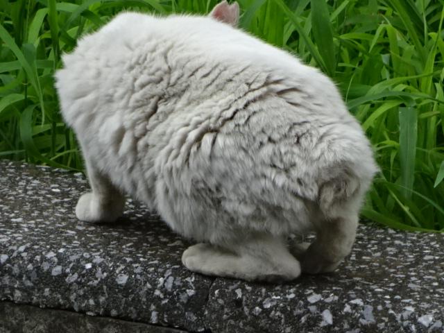 ウサギっぽい