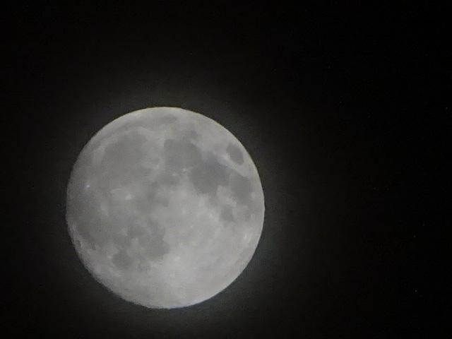 見上げれば月 そういえばもうすぐ満月だった。