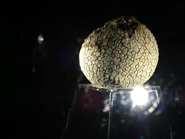謎の軟式ボール
