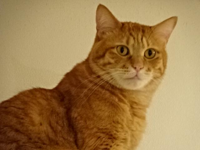 ソルという名前の猫【今日の一枚】