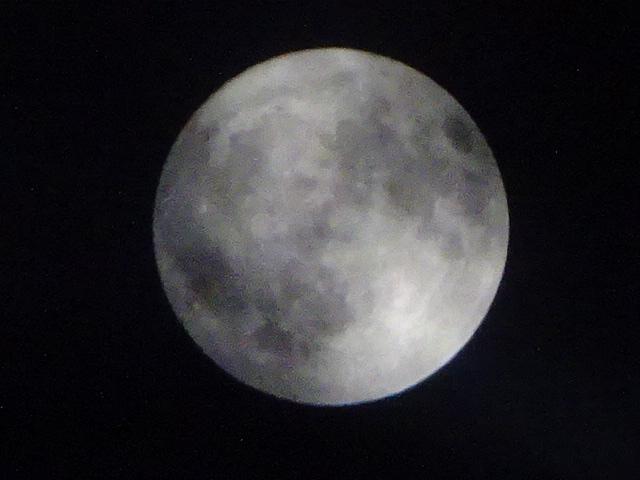 今日の月も丸かった。満月手前。