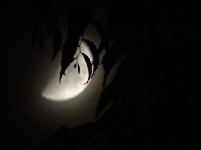 真夜中に、月が見えるかと思ったけれど、一面雲に覆われていた