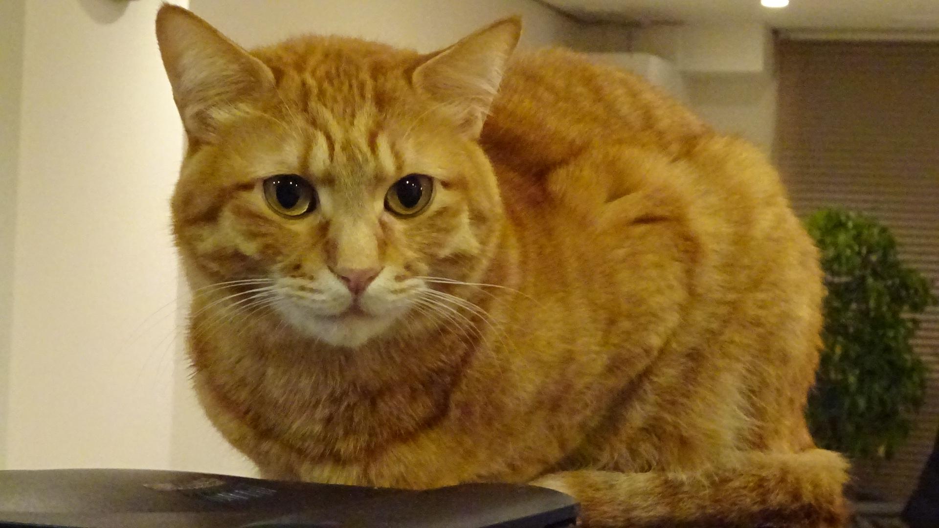 今日のおもてなし猫・ソル【最高の一枚】