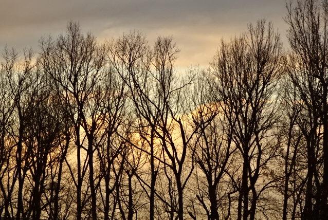 今日(1月31日)は獅子座の満月で、ブルームーンで、皆既月食の赤い月