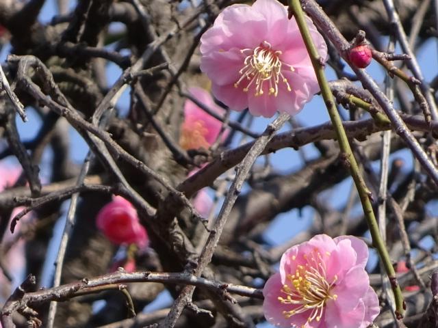 花粉症対策しようかと。花粉の季節・・・もしかして、私?