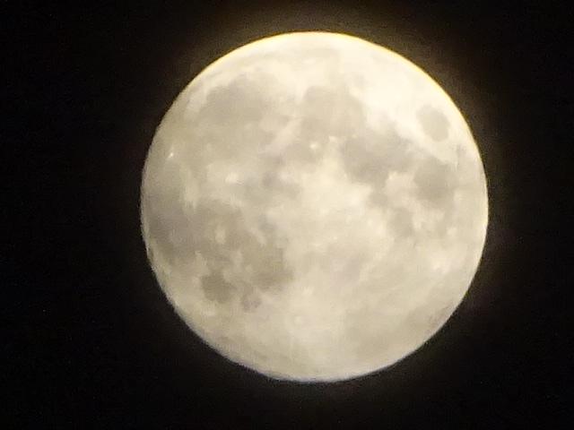 月が綺麗な夜ですね。昨日も今日も。もうすぐ満月だ。