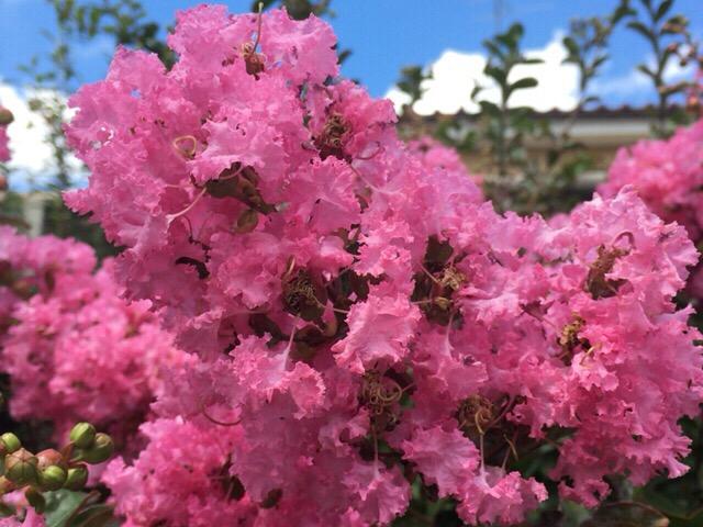 今日の一枚 ピンクの花