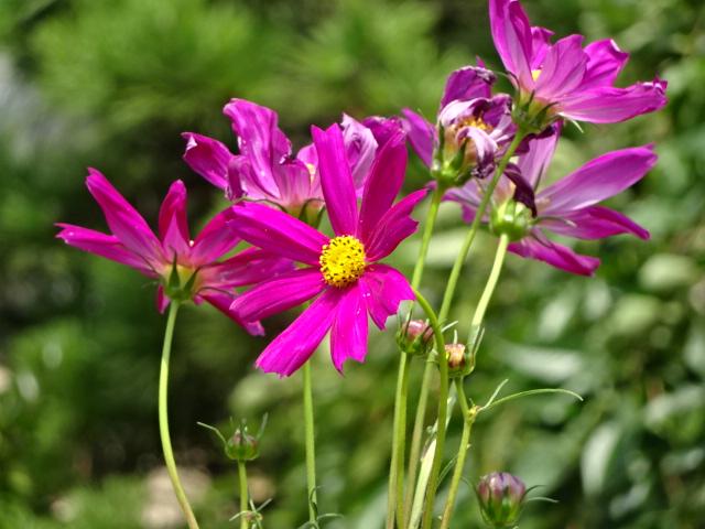 ウォーキングの途中、一瞬で切り取った花【今日の一枚】