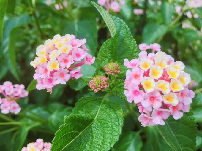 綺麗に撮れた花、と、虫【今日の一枚】