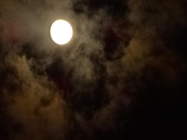 今日の月。もうすぐ満月なのかー。