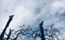 今日の空を記しておこう。雨が降りそうな雲がいる。2018Dec22