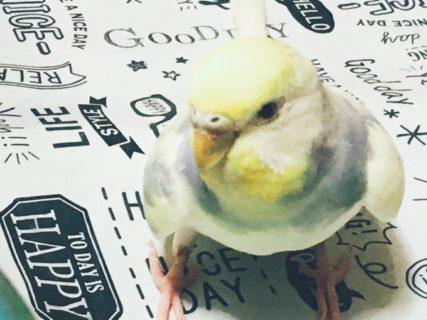 今日からまたしばらく小鳥当番(小鳥の世話係)