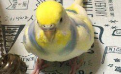 今日の小鳥も元気です。・・・しかし寒すぎる。