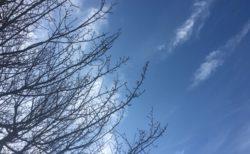 今日の空を記しておこう。2019Jan08 空を見上げるココロの余裕を持ちましょう。