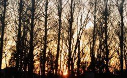 オレンジ色の夕焼け【今日の一枚】