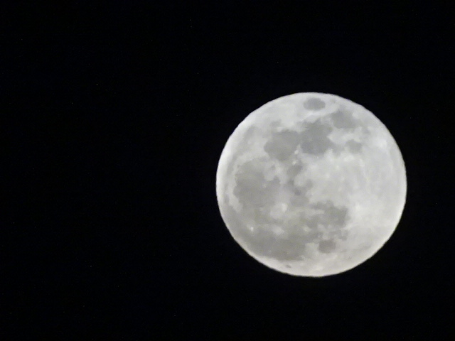 今日の満月、大きい。さすがのスーパームーン。