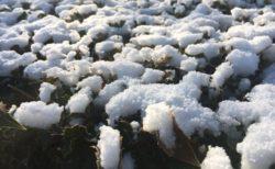 昨日の雪の名残りが残ってました。夜は凍るかもしれない?