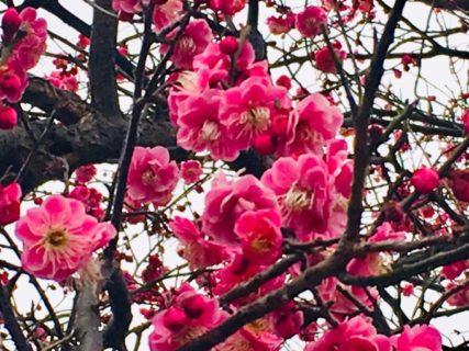 曇りの日でも花は咲く。【今日の一枚】