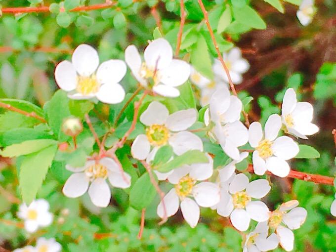 風に揺れる白い花 強い【今日の一枚】