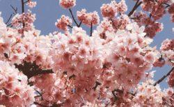 バレットジャーナル 人生を変えるノート術  ライダー・キャロル 4月18日発売 楽しみだ。