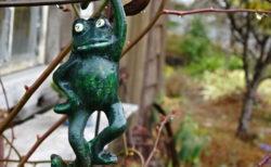 かわいいカエル@ひとやすみの庭【今日の一枚】