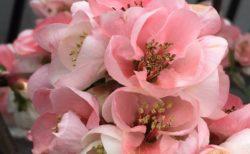 美しい花。【今日の一枚】