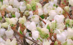小さくて白い花【今日の一枚】