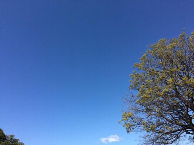 今日の空を記しておこう。2019Apr09