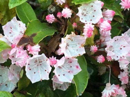 小さな花【今日の一枚】