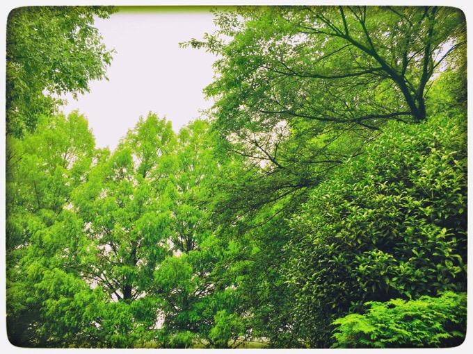 雨の日もiPhoneで画像加工。Snapseedで晴れの日の風景【今日の一枚】