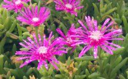 雨に濡れるムラサキの花【今日の一枚】