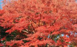 【英会話】高尾山で外国人に話しかけてみた。リアル英会話レッスン(先生はいませんが)