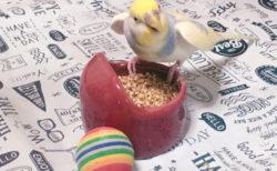 小鳥のエサをとりあえず外においてみたら、普通に巣箱の外に出てきてくれた【小鳥当番】