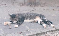 高尾山頂上で出会ったネコ