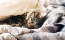 朝が早いと夜は眠い。当たり前だけど当たり前じゃない。