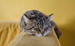 【DMM英会話】眠くて寒い → 寒すぎて眠いは本当か