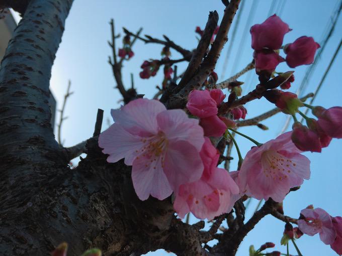 やる気のない金曜日の巻・・・隠れ家の桜、的な?【今日の一枚】
