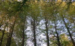 お気に入りの緑の木々【今日の一枚】