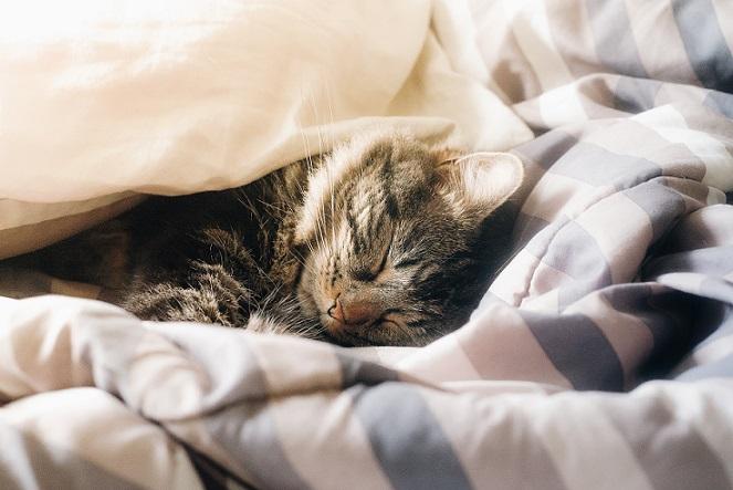 早起きするから早寝ができないと睡眠不足になる?かもしれない。