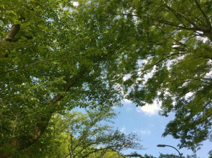 木々の隙間の朝の空【今日の一枚】